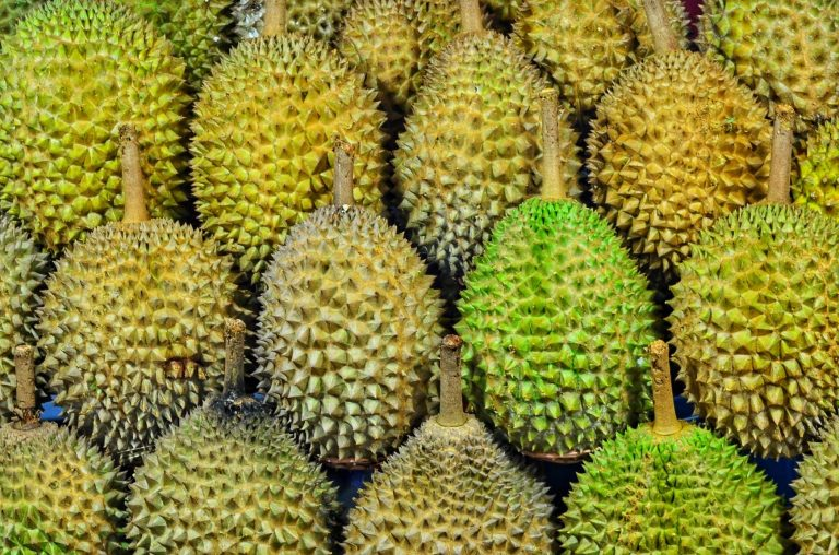 durian season: fat content, does it cause diabetes, things you should know