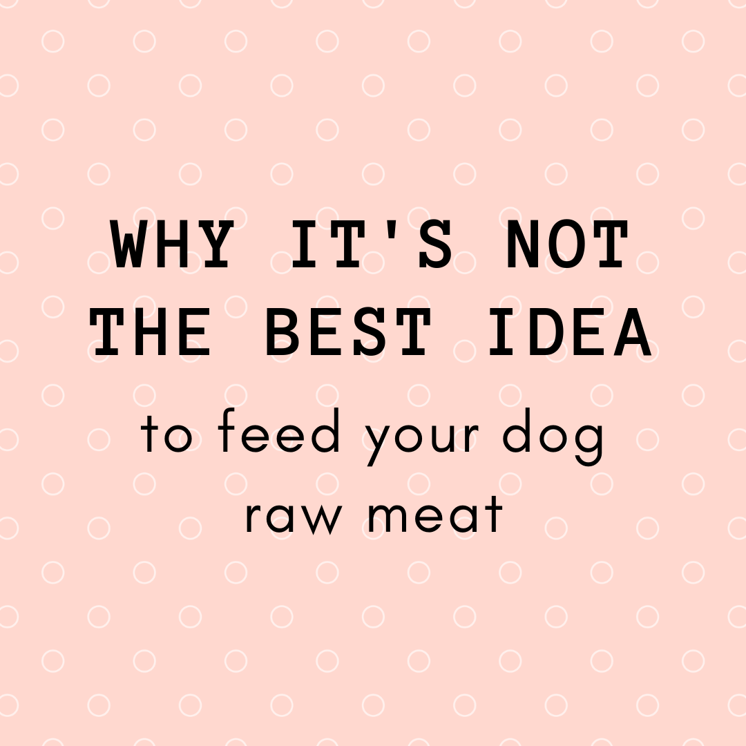 Why it's not the best idea to feed your dog raw meat